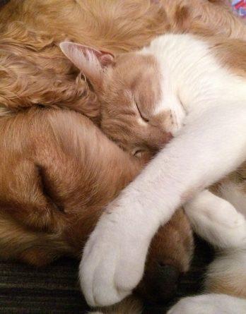 ZDROWY PUPIL - Naturalna Karma Dla Psów i Kotów
